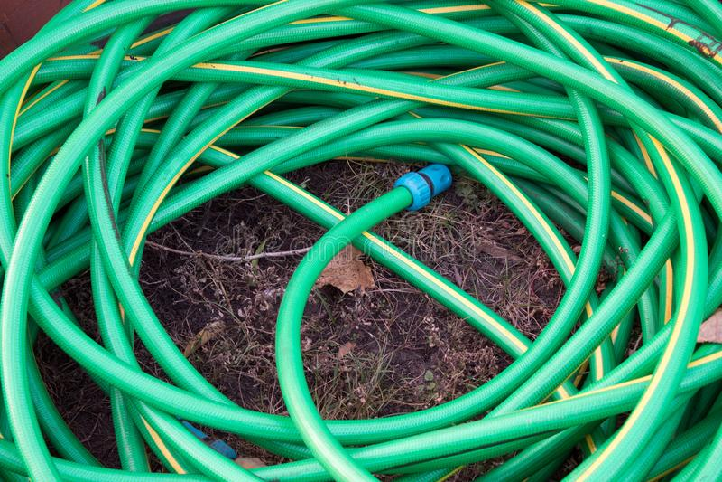 hoogste mening van slang op gras, minimalistic conceptie stock foto's
