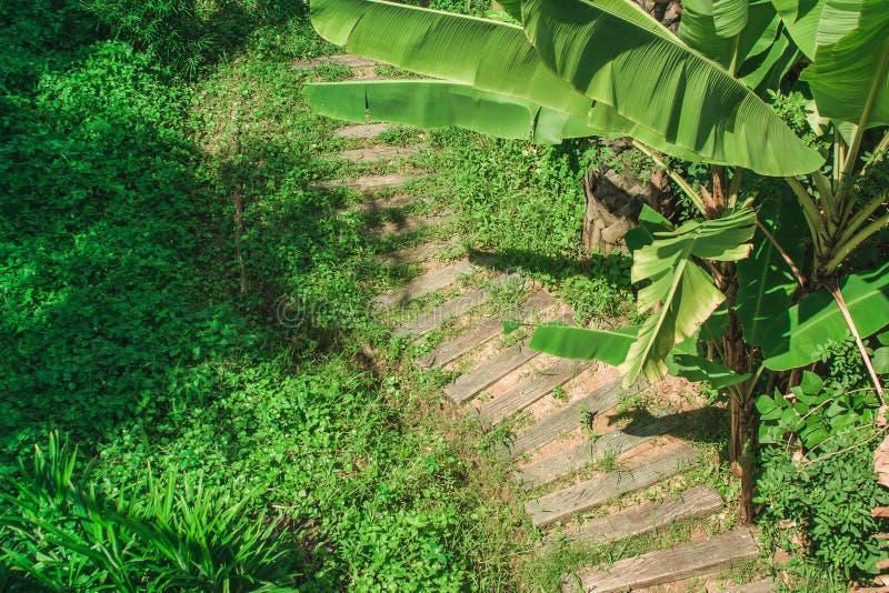 Hoogste menings houten voetpad of gang naast groene bomen in openluchttuin royalty-vrije stock foto