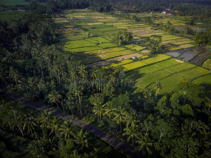 Hoogste menings luchtfoto van vliegende hommel over padieveld in Ubud, het eiland van Bali royalty-vrije stock foto