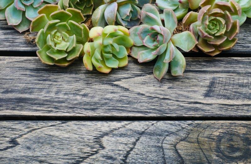 Hoogste menings succulente installatie op houten achtergrond stock afbeeldingen