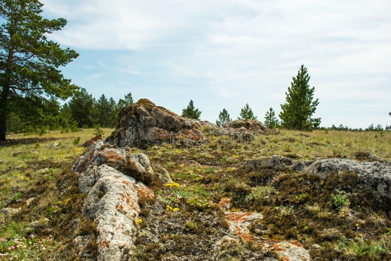 Hoogste schot van een lichte grote die steen in het hout met zacht groen mos in zonlicht met een laag wordt bedekt royalty-vrije stock fotografie