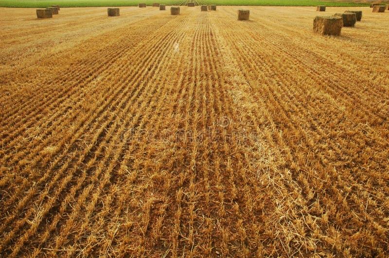 Hooibalen in hayfield stock afbeeldingen