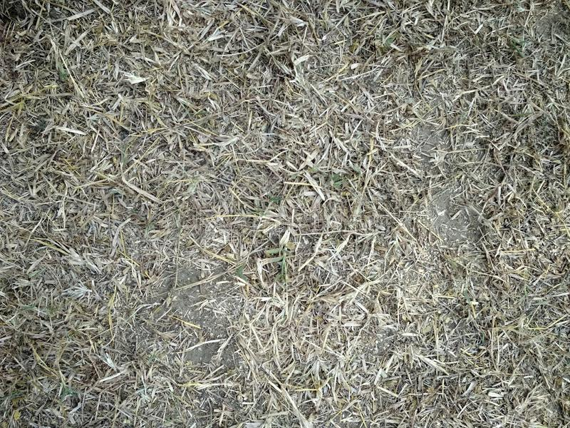 Hooiberg, schoof van droog gras, hooi, stro, textuur, abstracte achtergrond royalty-vrije stock foto's