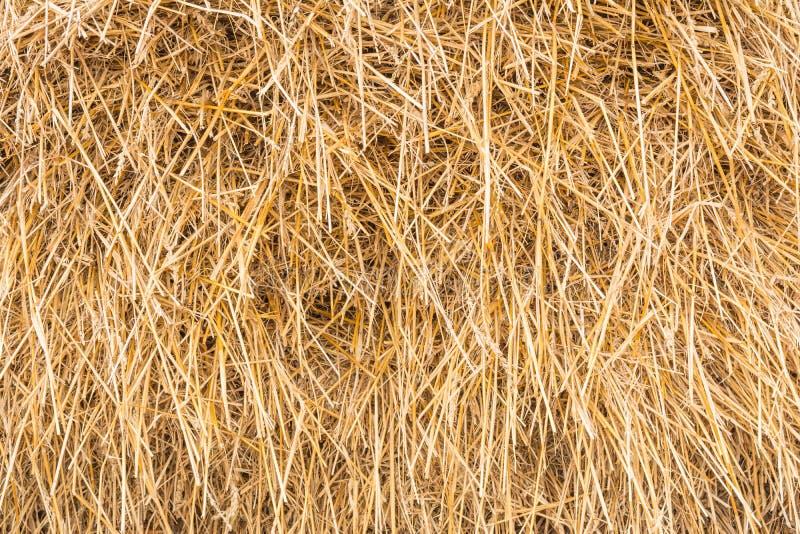 Hooiberg, schoof van droog gras, hooi, stro, textuur, abstracte achtergrond stock foto