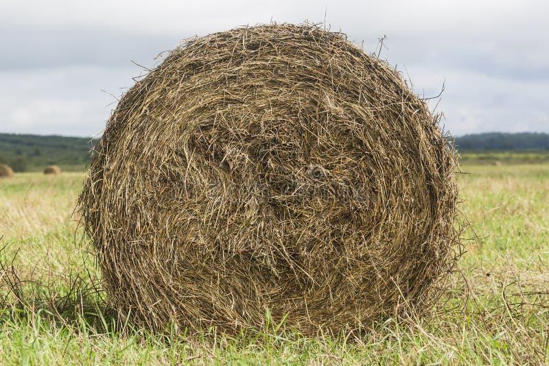 Hooibergbroodje op gebieds dichte omhooggaand op groen gras stock fotografie