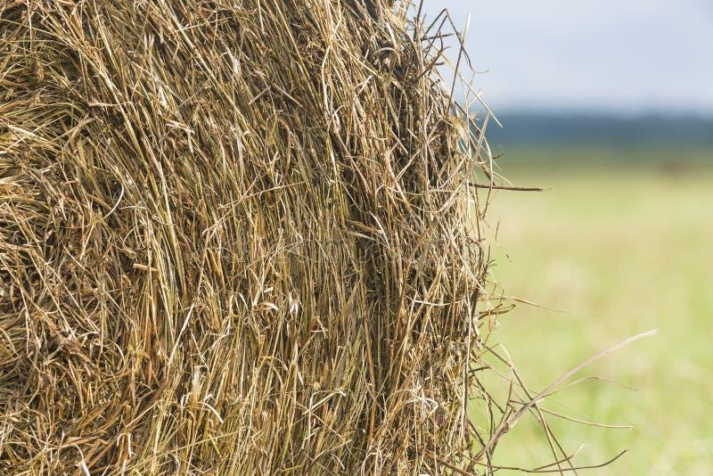 Hooibergbroodje op gebieds dichte omhooggaand op groen gras royalty-vrije stock fotografie