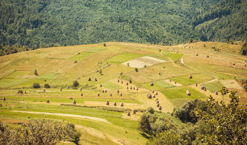 Hooibergen op mooie groene heuvels met bosachtergrond Landschap van Karpatische bergen en lokale landbouwbedrijven bij de zomer stock afbeelding