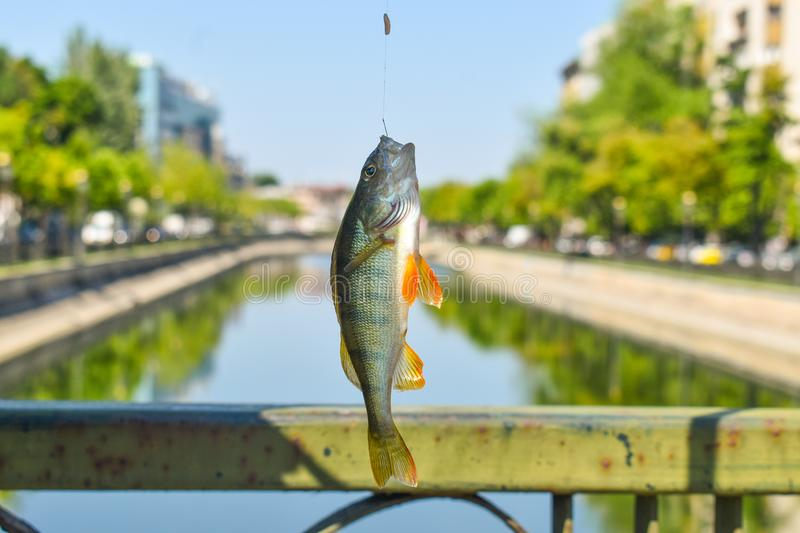 Hooked fish with the road in the downtown river of the city. Fishing on the  big down bridge in a sunny summer day. Close-up view stock photos