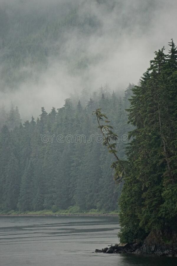 Hoonah, Alaska: A lone pine tree leans out over the water on the edge of a cliff royalty free stock image