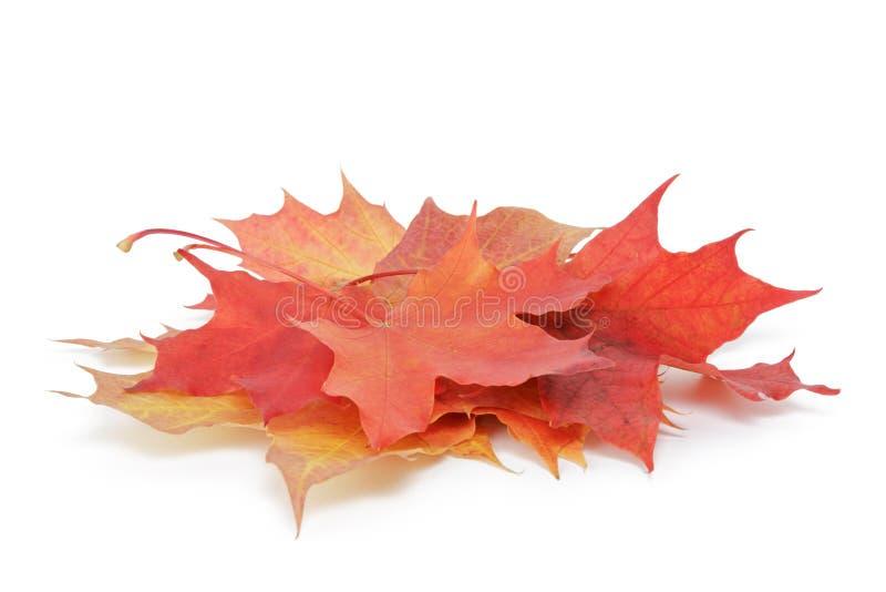 Hoop van de kleurrijke bladeren van de esdoornherfst op wit royalty-vrije stock foto