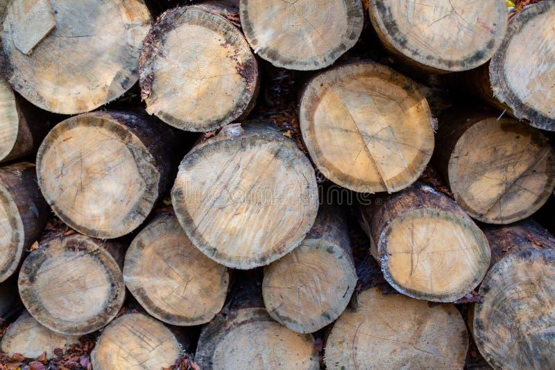 Hoop van felled naaldbomen met heel wat microcracks Zachte nadruk royalty-vrije stock foto