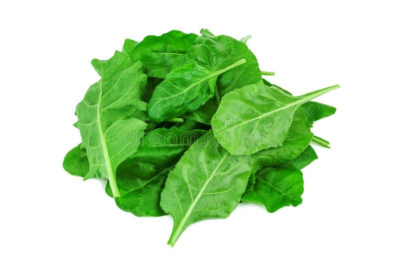 Hoop van gezonde groene spinazie stock fotografie