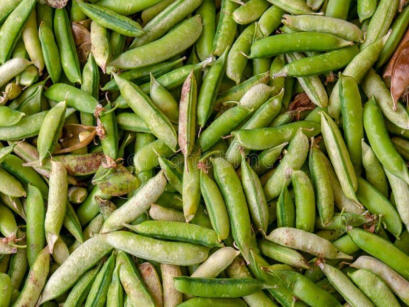 Hoop van groene peulen stock fotografie