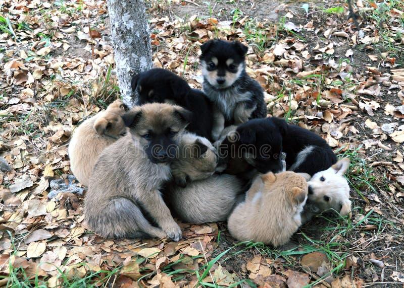 Hoop van kleine puppy op de herfstgebladerte royalty-vrije stock foto