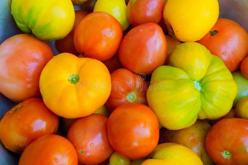 Hoop van Rijpe Organische Multicolored Tomaten bij Landbouwersmarkt Heldere trillende kleuren Gezond vitaminen Super voedsel royalty-vrije stock fotografie
