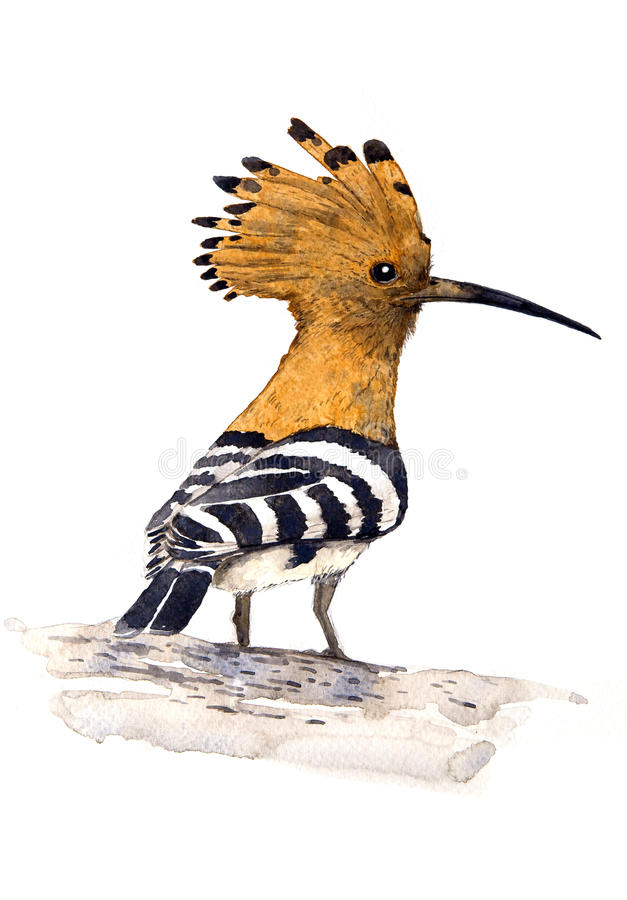 Download Hoopoe stock illustration. Image of nature, logos, collections - 28315514