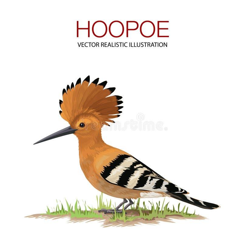 Hoopoe stock illustrationer