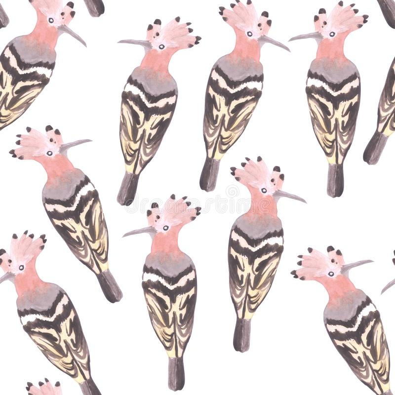 Hoopoe or Upupa epops crown bird seamless watercolor birds painting background.  royalty free illustration