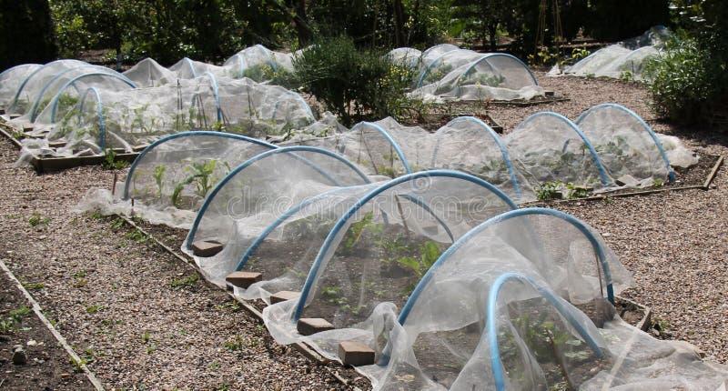 Hoops and Fleece. Plastic Hoops and Fleece to Protect Garden Vegetables stock photo