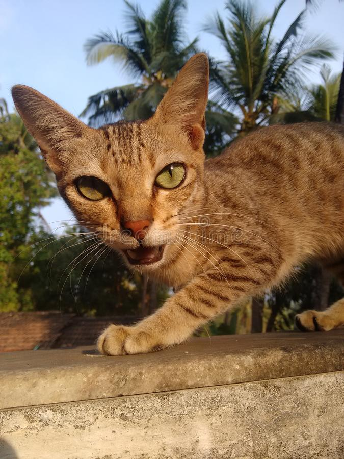 Hoor me miauw stock afbeelding