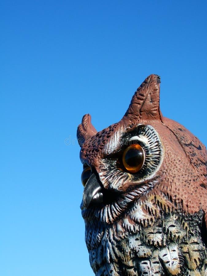 Download Hootie 2 arkivfoto. Bild av natur, dyft, gammalt, öga, ögon - 37248