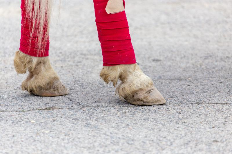 Hooves of a circus horse on asphalt royalty free stock photos