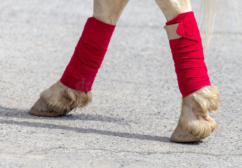 Hooves of a circus horse on asphalt royalty free stock photo