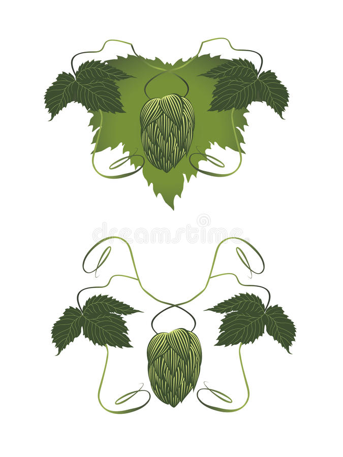 Download Hop stock vector. Image of white, bitterness, branch - 23019204
