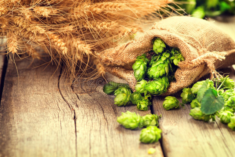 Hop in bag and wheat ears on wooden cracked old table stock image