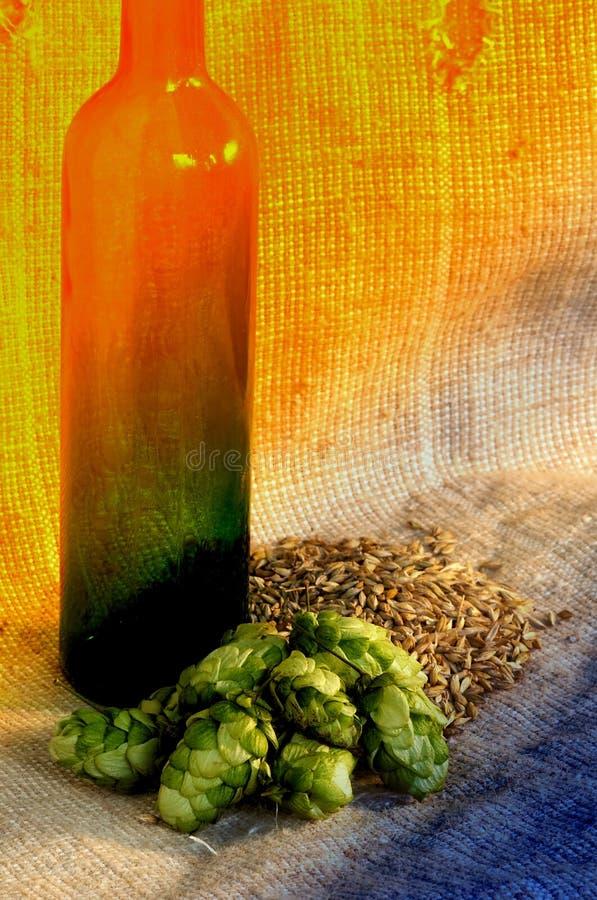 Hop and barley royalty free stock photo