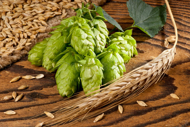 Hop Cone Stock Photography
