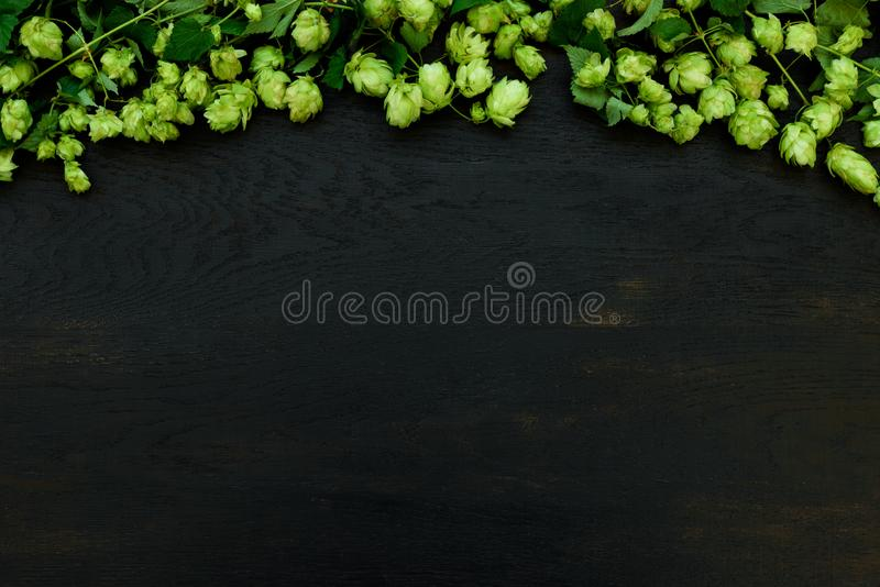 Hop cones border on black wooden background. Harvesting or brewery concept. Top view. Flat lay.  stock photo