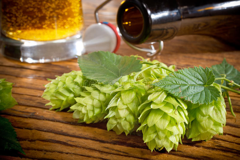 Hop Cones. Bottle of beer and pint royalty free stock photography