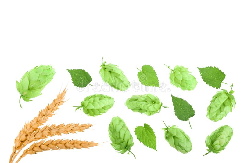 Hop cones with ears of wheat isolated on white background with copy space for your text. Top view. Flat lay pattern.  stock image