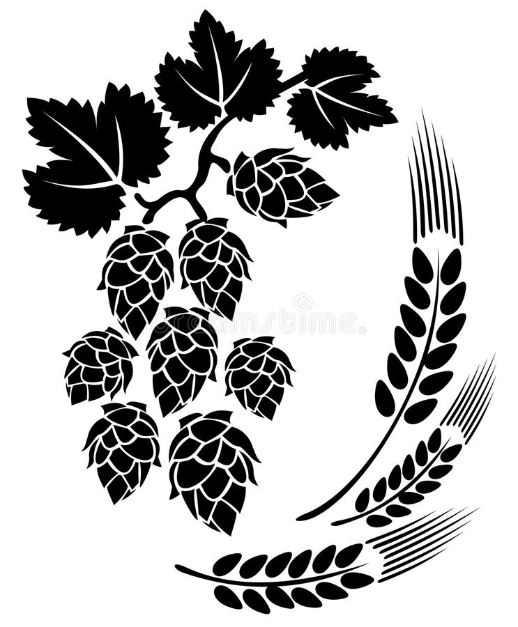 Hop and ears. Stylized hop and ears on a white background vector illustration
