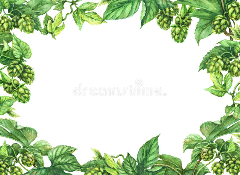 Hop Frame. Hand drawn hop branches. Watercolor green rectangle horizontal frame with leaves and cones of hops. Oktoberfest theme. Space for text vector illustration