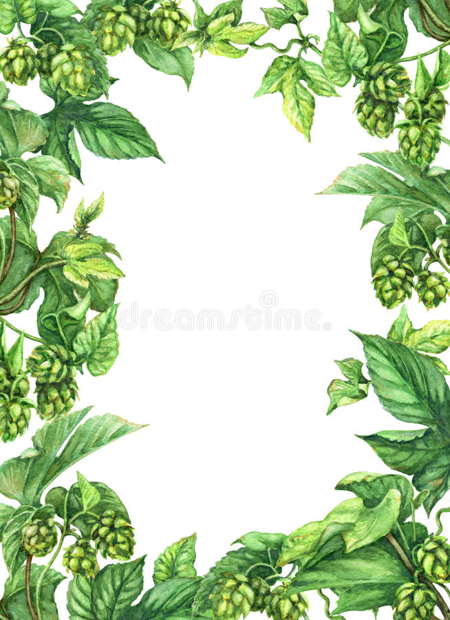 Hop Frame. Hand drawn hop branches. Watercolor green rectangle vertical frame with leaves and cones of hops. Octoberfest theme. Space for text royalty free illustration