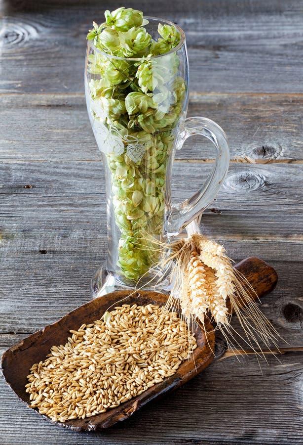 Hop, korrel en graangewassenoren stock afbeelding