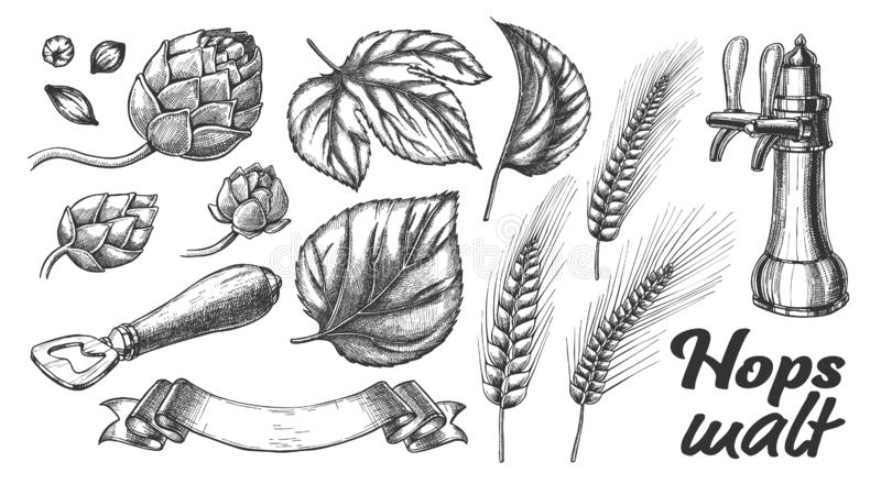 Hop Leaves Barley Wheat Rye Ear Opener Set Vector vector illustration