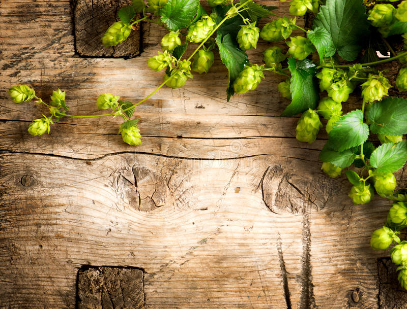 Hop plant border design. Twigs of hops over wooden cracked table stock photos