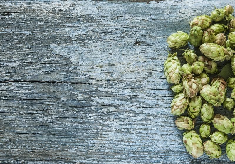 Beer production ingredient. Brewery. Hop twig over old wooden table background. Vintage style royalty free stock photos