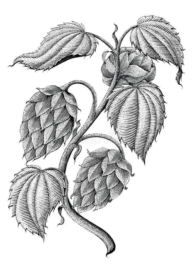 Hop uitstekende die tekening door inkt op witte achtergrond wordt geïsoleerd stock illustratie
