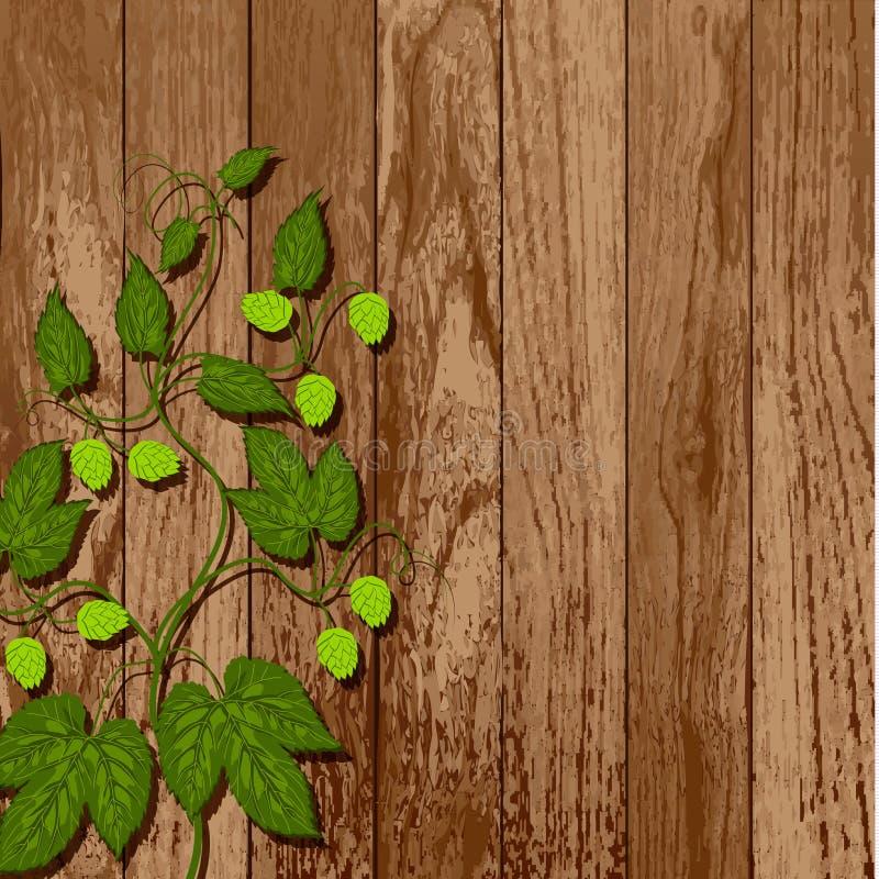 Hop vine on a wooden wall. vector illustration