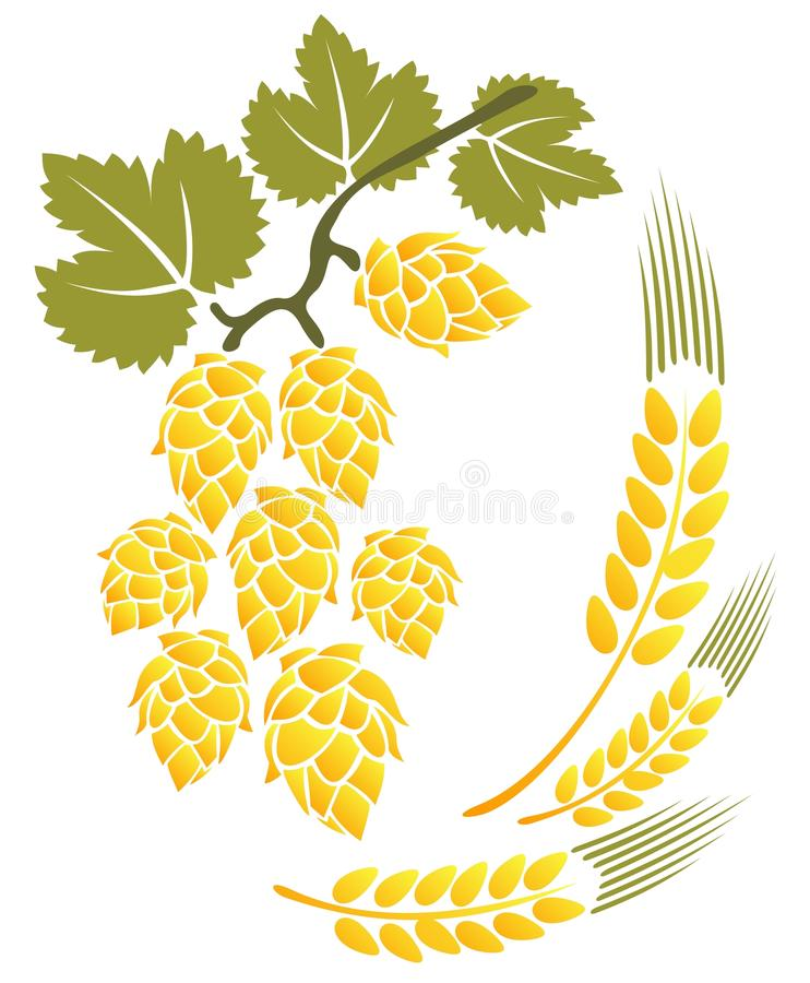 Hop and wheat vector illustration