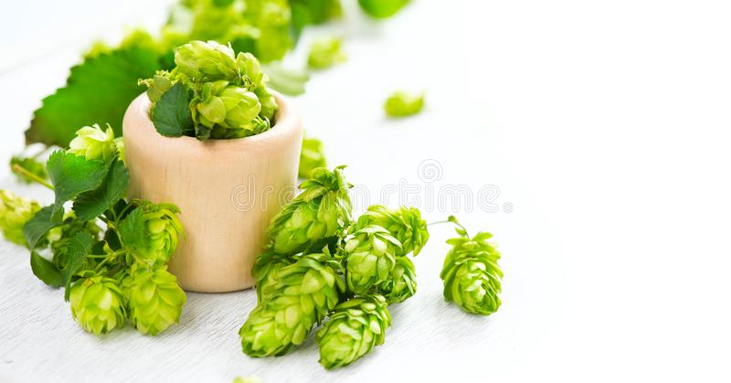 Hop. Whole hops in wooden bowl on white table. Brewery. Beer production ingredients. Fresh picked hop cones royalty free stock photo