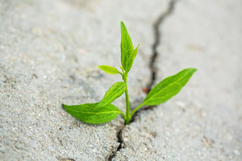 Hope. Light at the End of the Tunnel Growth Opportunity Plant Conquering Adversity Motivation stock photos
