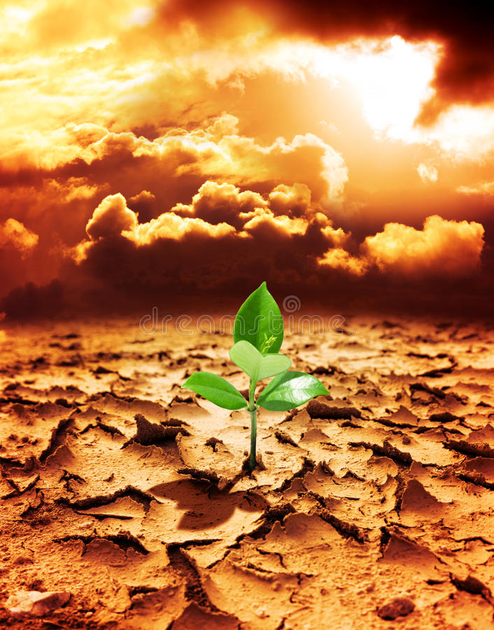 Hope of new life in a destroyed environment. From pollution stock photography