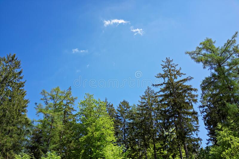 Small white cloud rising over green tree tops in blue sky royalty free stock photos