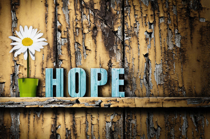 Hope text word vase with daisy on worn wooden background royalty free stock photography