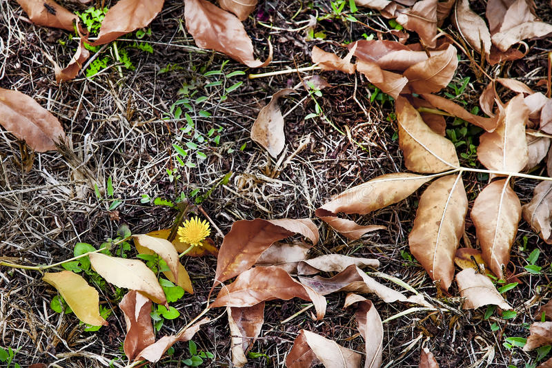 Download A Hope To Life For A Dandelion To  Beginning Of Winter Stock Photo - Image: 47968812